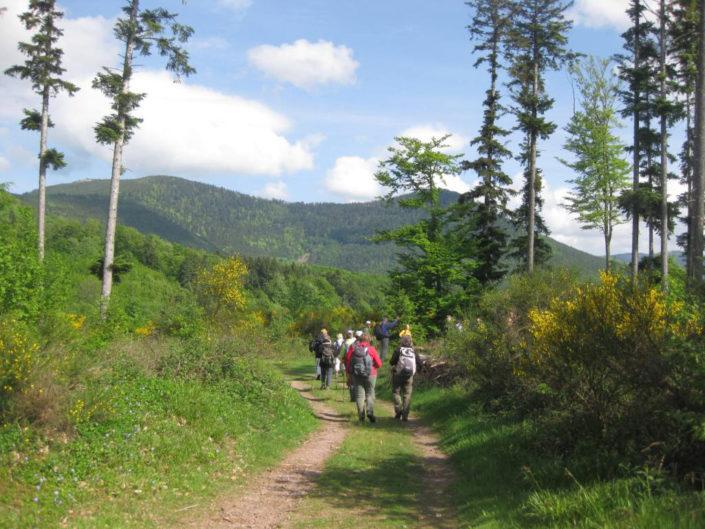 Un groupe d'Amis de la Nature de Schiltigheim en randonnée