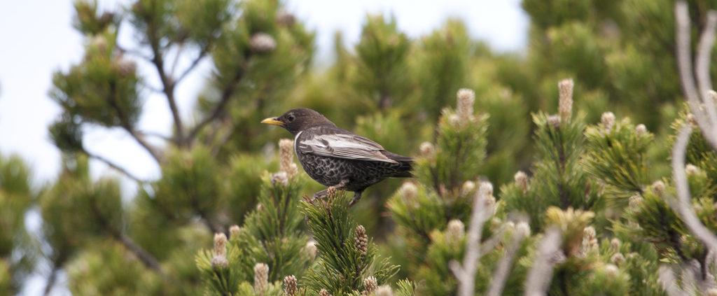 Oiseau alsacien dans un arbre Amis de la Nature 67