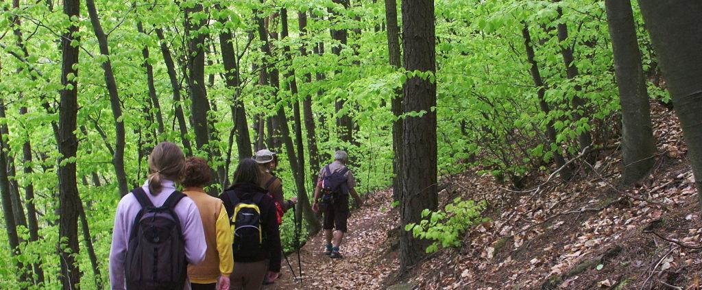 Randonnée dans les Vosges Amis Nature Alsace Bas-Rhin 67