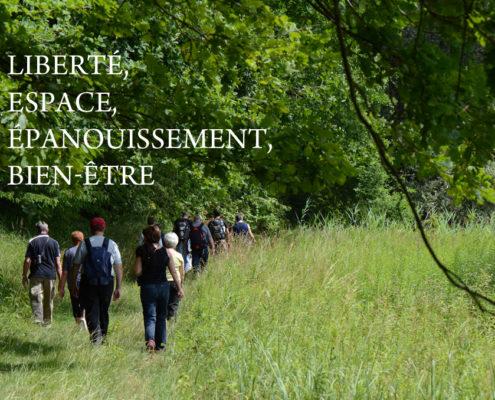 balade d'été dans les Vosges