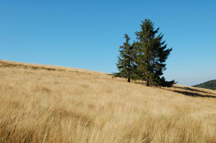 paysage de chaume au Hohbuhl dans les Vosges