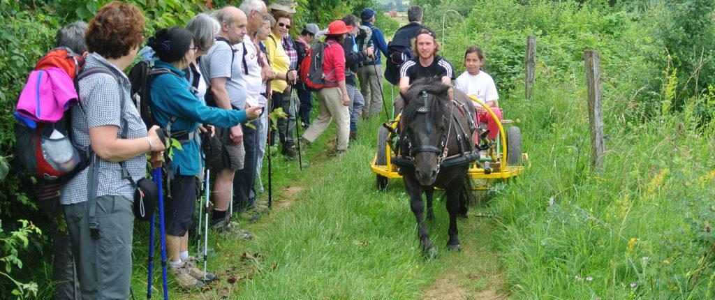 Rencontre avec un attelage sur la colline du Bastberg